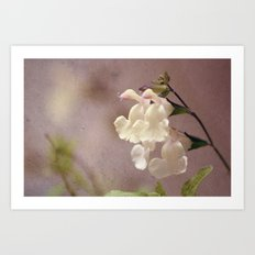 White flower and texture Art Print