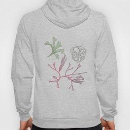 Seaweed and Lotus Root Hoody