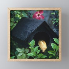 Fresh French Bread Delivery in Tahiti Framed Mini Art Print