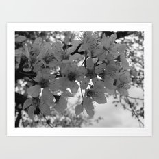 Places in Black & White: Plum Tree 16 Art Print