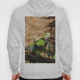 Monk Parakeet Fuerteventura Spain Hoody