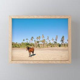 Wild horse on a beach with palm trees Framed Mini Art Print