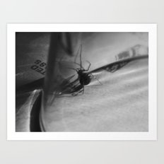 Spider under glass II Art Print