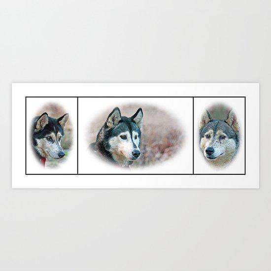 3 Huskys Art Print