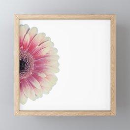 colored summer ~ pink and white gerbera Framed Mini Art Print