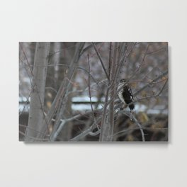 Hawk's Got an Eye on You Photo Metal Print