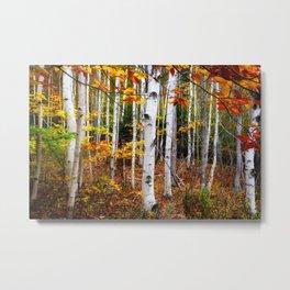 Acadia Fall color Metal Print