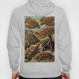 Sea Turtle Collage-Ernst Haeckel Hoody