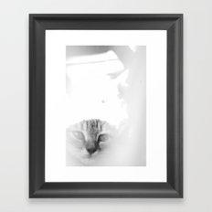 Bliss Kitten 2 Framed Art Print
