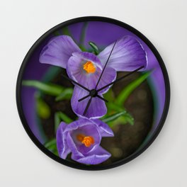 Potted Crocus hoping for spring Wall Clock