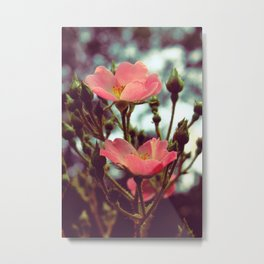my mother says these are buttercups. Metal Print