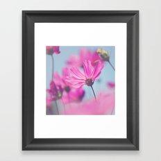Cosmoso Framed Art Print