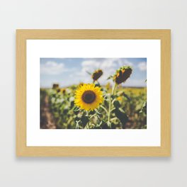 Allora | Sunflowers Framed Art Print