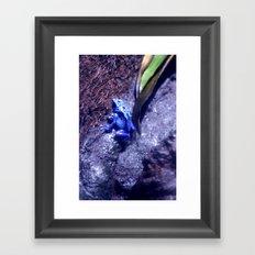 Mr Blue Frog Framed Art Print
