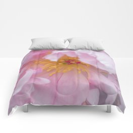 Pink Confection Comforters