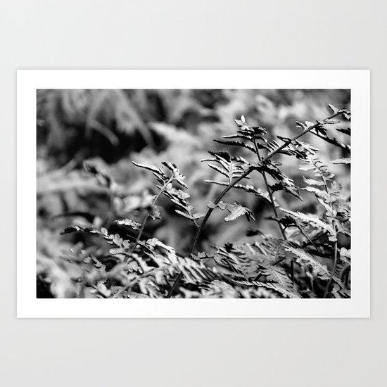 Fern in Black and White Art Print