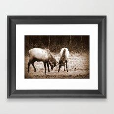 Fighting Elk Framed Art Print