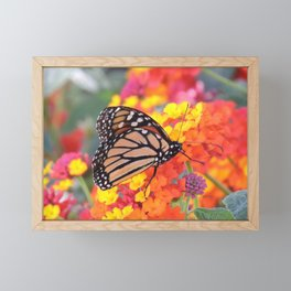 Monarch Feeding on Lantana Framed Mini Art Print