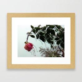 fROSEn Framed Art Print