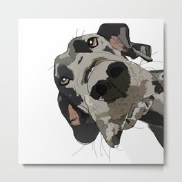 Great Dane dog in your face Metal Print