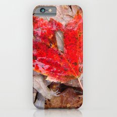 autumnal reverie 657 Slim Case iPhone 6s