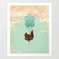Chickens can't fly (