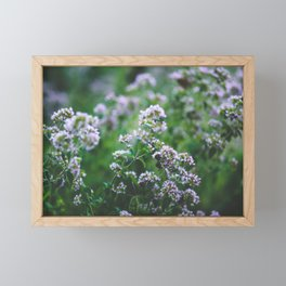 Blooming Oregano Framed Mini Art Print
