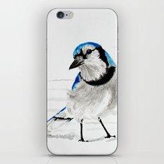 Blue Jay (Cyanocitta cristata) iPhone & iPod Skin