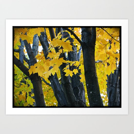 gold and black forest Art Print
