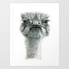 Ostrich G119 Art Print