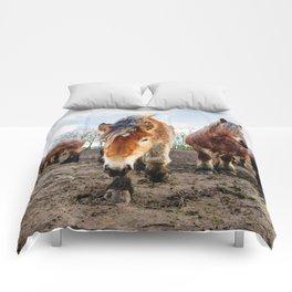 Belgian Draft Horse Comforters
