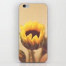 Begin Again iPhone & iPod Skin