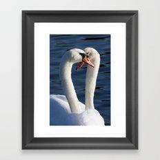 Courting Swans  Framed Art Print