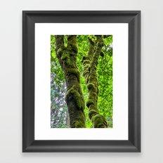 Moss-Covered-Maple Framed Art Print