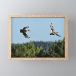 Two Ducks Flying Framed Mini Art Print