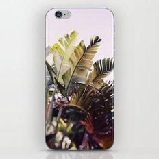 Paradise #1 iPhone & iPod Skin