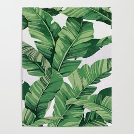 Tropical banana leaves VI Poster