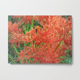 Secret Garden | Red Spider Lily Metal Print