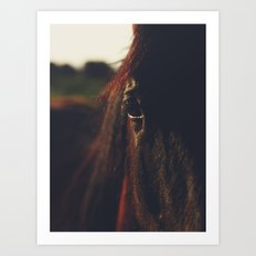 Horse, macro photography, head, mane, sunset, hasselblad, italy, horses Art Print