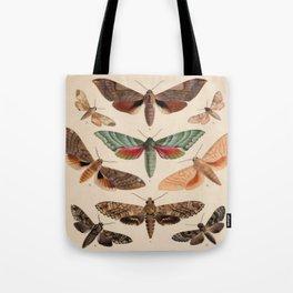 Vintage Natural History Moths Tote Bag
