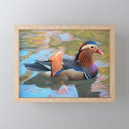 Beautiful Mandarin Duck at the Pond Framed Mini Art Print