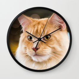 Red-white tabby Maine Coon cat, close-up portrait Wall Clock