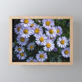 Plant Patterns - 𝘌𝘳𝘪𝘨𝘦𝘳𝘰𝘯 sp. Framed Mini Art Print