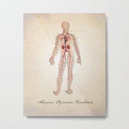 Circulatory System Human Anatomy Art Print Metal Print