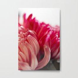 Chrysanthemum Flower Metal Print