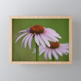 Purple Coneflower Pair - A Butterfly's Best Friend Framed Mini Art Print