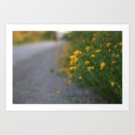 flowers and path Art Print