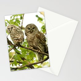 Barred owl mother and child Stationery Cards