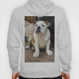 British bulldog puppy Hoody