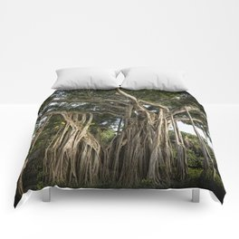 Banyan Tree at Bonnet House Comforters